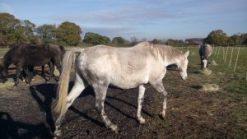 tlw-horses